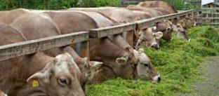 נייר עמדה: צער בעלי חיים בתעשיית המזון