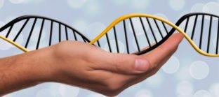 הנדסה גנטית ובשר משובט: פנינו לאן?