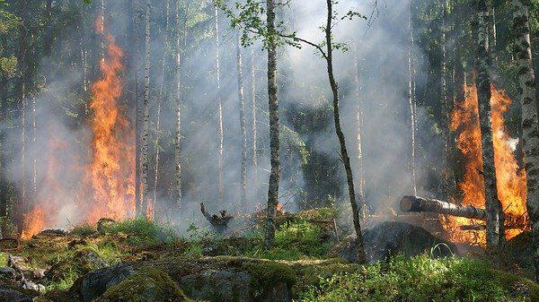 השריפות באמזונס: נדרשת חזרה בתשובה