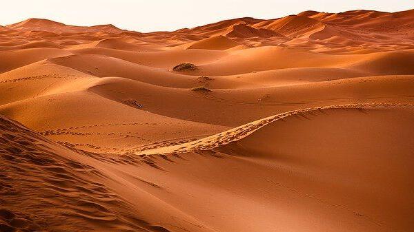 הליכה במדבר - הדרך להקמת האומה