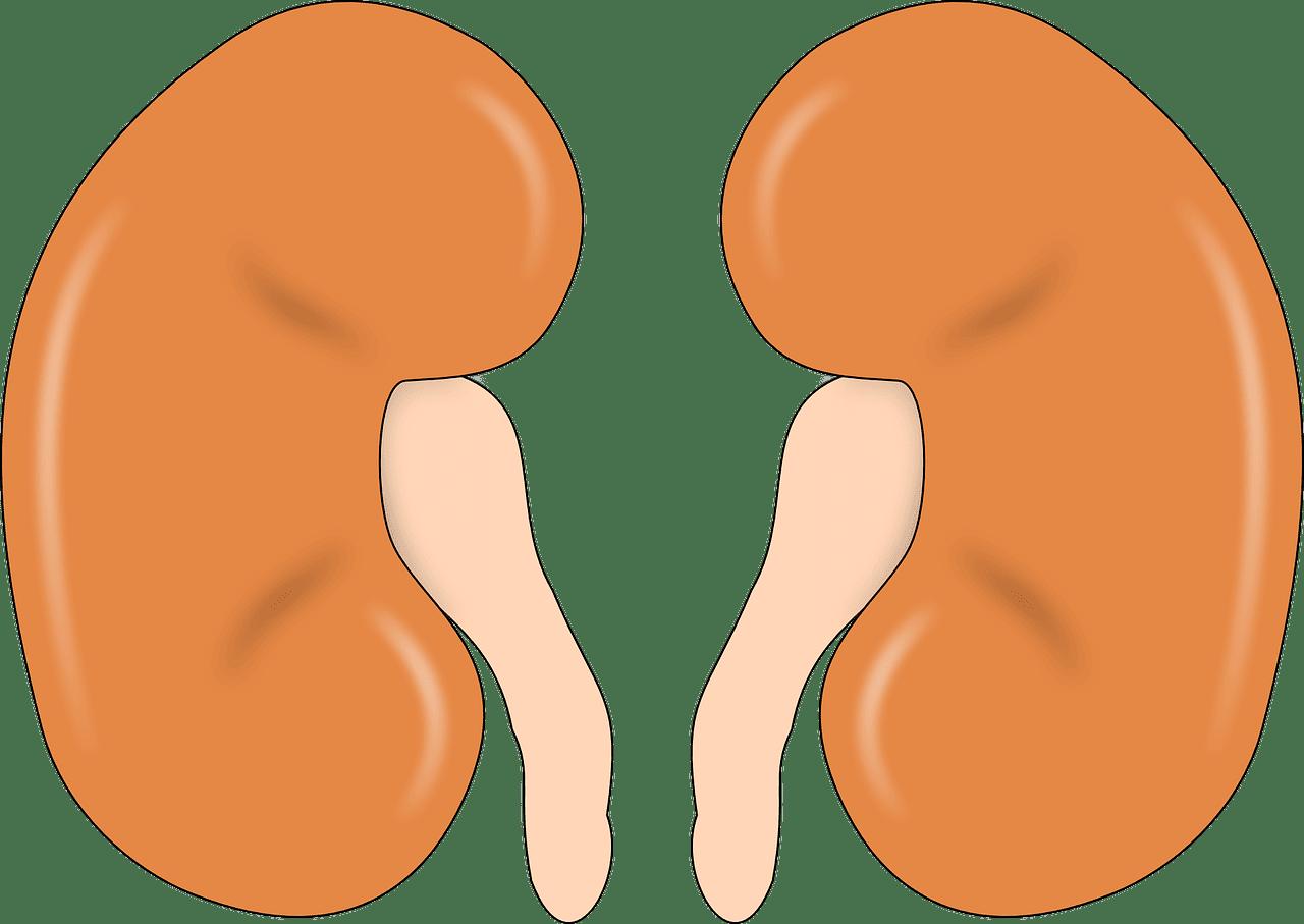 האם השתלת כליה היא לא התערבות במעשה הבריאה?
